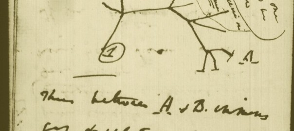 DarwinArchive_1837_NotebookB_CUL-DAR121.-_038